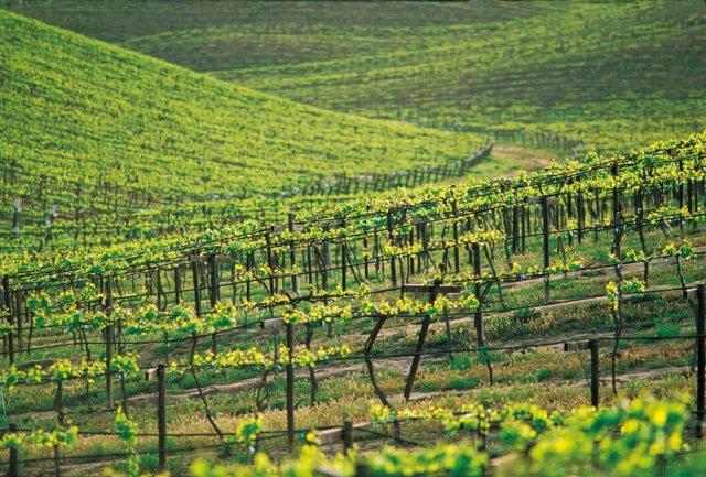 Temecula valley vineyards