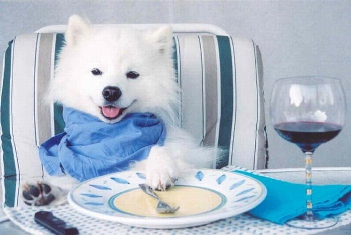 dog ready to eat